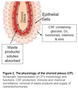 Choroid Plexus Physiology